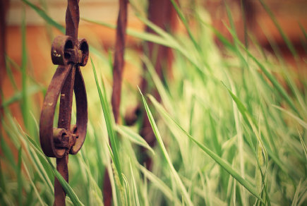 old-iron-fence